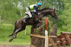 Chestnut horse jumping. Vakin Maksim on Harlej-Devidson Royalty Free Stock Image