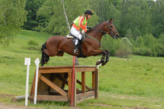 Chestnut horse jumping. Kuz'mina Anastasija on Pavian Stock Photo