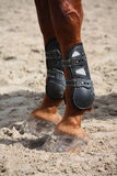 Chestnut horse legs close up with splint boots Royalty Free Stock Image