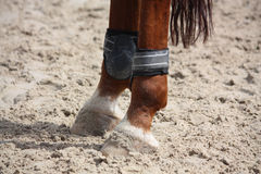 Chestnut horse legs close up with splint boots Royalty Free Stock Photos