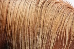 Chestnut horse mane close up Royalty Free Stock Image