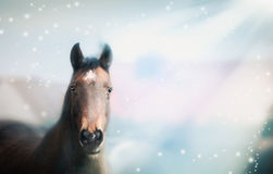 Chestnut Horse portrait on nature background with Sun rays Royalty Free Stock Photo