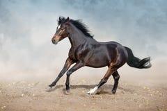 Chestnut Horse run in desert. Bay horse run on desert dust stock image
