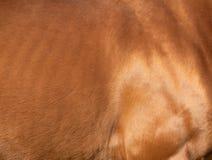 Chestnut horse skin. Texture background Royalty Free Stock Photo