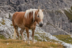 Chestnut horse standing above valley Royalty Free Stock Photography
