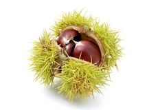 Chestnut in husk Royalty Free Stock Photography