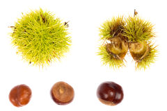 Chestnut in husk Royalty Free Stock Photo