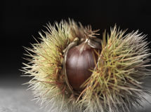 Chestnut husk Royalty Free Stock Photos