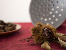 Chestnut husk Stock Photos
