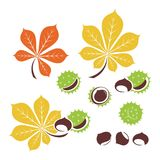 Chestnut icons. Vector illustration. Chestnut icon or logo in modern line style. Vector illustration on a white background royalty free illustration