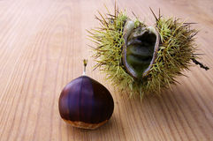 Chestnut III. Sweet chestnut in her house of thorns in wood background Royalty Free Stock Photo