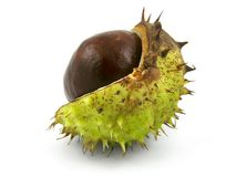 Chestnut isolated Royalty Free Stock Image