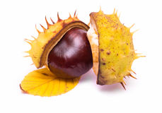 Chestnut isolated Royalty Free Stock Photo