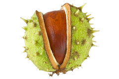 Chestnut isolated on white Royalty Free Stock Images