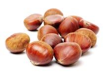 Chestnut. Isolated on white background stock photography