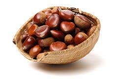 Chestnut. Isolated on white background stock image