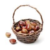 Chestnut. Isolated on white background royalty free stock photography
