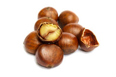 Chestnut isolated on white background. Royalty Free Stock Photo