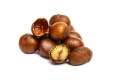 Chestnut isolated on white background. Stock Photo