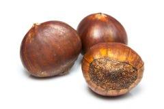 Chestnut isolated on white Royalty Free Stock Photo