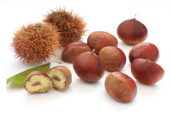 Chestnut in its burr and leaf. On white background stock photo