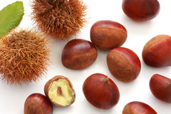 Chestnut in its burr and leaf. On white background stock photography