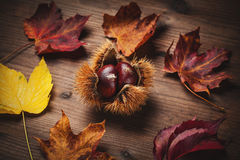 Chestnut and leaf Stock Photos