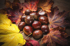 Chestnut and leaf Stock Photography