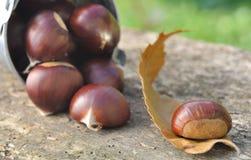 Chestnut on leaf Royalty Free Stock Images