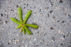 Chestnut leaf on the road.  royalty free stock photos