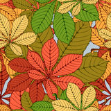 Chestnut leaf. Seamless randomly pattern made Isolated colored autumn chestnut leaves .  illustration Royalty Free Stock Images