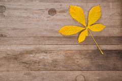 Chestnut leaf on wood surface with free space. Autumn background. Chestnut leaf on wood surface with free space stock photo
