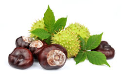 Chestnut with leafs Royalty Free Stock Photos