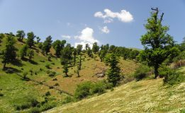 Free Chestnut-leaved Oak Trees In Highlands Of Alborz Mountains Stock Photos - 159833863