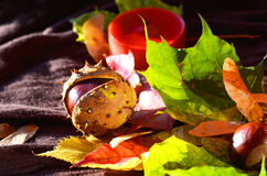 Chestnut and leaves Royalty Free Stock Images