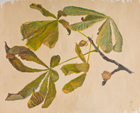 Chestnut leaves. Gouache hand painted chestnut leaves in autumn stock illustration