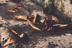 Chestnut and leaves, autumn Royalty Free Stock Photos