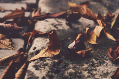 Chestnut and leaves, autumn Stock Photo