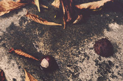 Chestnut and leaves, autumn Stock Photos