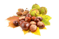 Chestnut and leaves Stock Photo