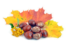 Chestnut and leaves Royalty Free Stock Photos