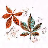 Chestnut leaves Royalty Free Stock Photo