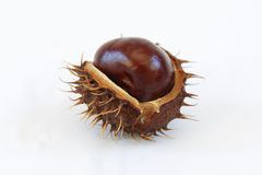 Chestnut macro. Macro of some chestnut on white background Stock Photo