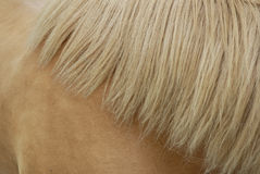 Chestnut mane. Close up chestnut mane pattern Stock Photo