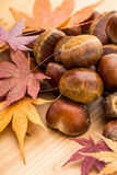 Chestnut and maple leave Royalty Free Stock Images