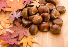 Chestnut and maple Royalty Free Stock Photo