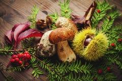 Chestnut and mushroom Royalty Free Stock Image