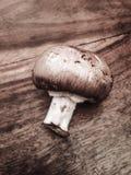 Chestnut mushroom royalty free stock photo