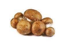Chestnut mushrooms, isolated on  white - Agaricus bisporus` Stock Images