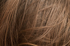 Chestnut natural hair Stock Photos